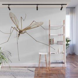Cranefly species Tipula oleracea Wall Mural
