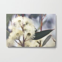 White Gum Blossoms Metal Print