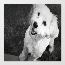 A Puppy Saying Hello Black and White Canvas Print