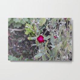 Burgundy Flower Metal Print