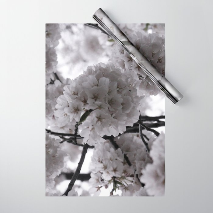 Pale Spring Flowers Delicate Japanese Cherry Blossoms In Bloom Wrapping Paper By Henatayeb