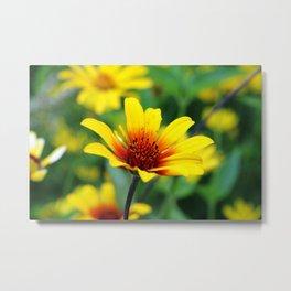 Prairie Flower Metal Print