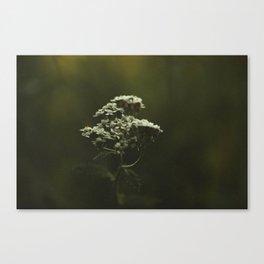 Summer Yarrow Canvas Print