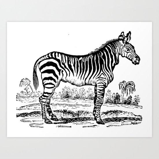 Vintage Zebra Art Print