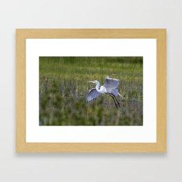 Egret in Flight Framed Art Print