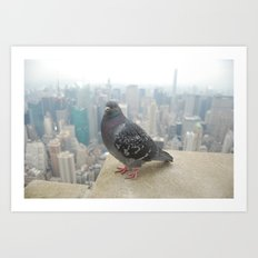 New York Pigeons Art Print