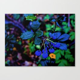Exotic fruit and rich. Canvas Print