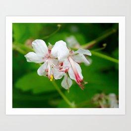 White Botanical Art Print