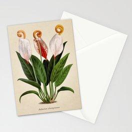 Anthurium scherzerianum old plate Stationery Cards