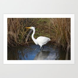 Just Right (Great Egret) Art Print