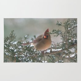 Wistful Winter Cardinal Rug