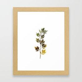 herbarium, natural Framed Art Print