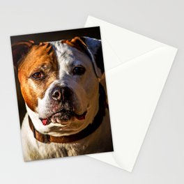 Pit Bull Rescue Poster Stationery Cards