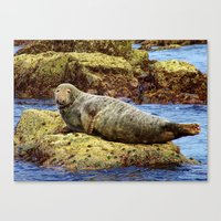 seal Canvas Prints featuring Seal by m sanders photography
