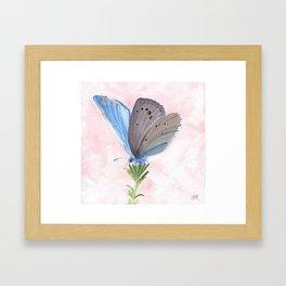 Blue and Purple Butterfly Art Framed Art Print
