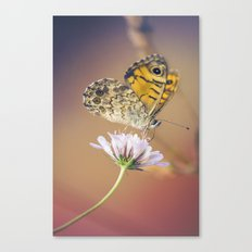 Butterfly Pink and yellow Canvas Print