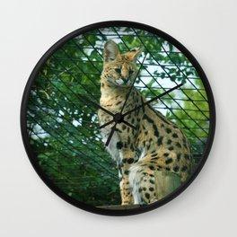 Serval Surveillance Wall Clock