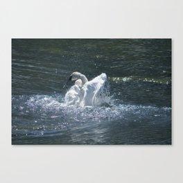Swan's Lake - Preening Trumpeter Swan Canvas Print