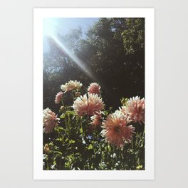 Sunbeam Cluster Art Print