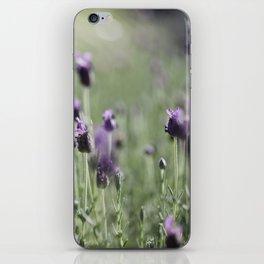lavender in summer light iPhone Skin