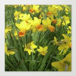 yellow narcissus VI Canvas Print