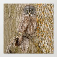 camouflage Canvas Prints featuring Camouflage by owlgoddessphotography