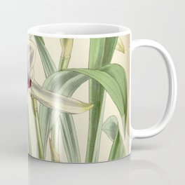 Cochleanthes discolor Orchid 1855 Coffee Mug