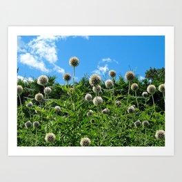 Fuzzy Pom Pom Flowers on a Grassy Hilly Slope on a Summer Day Art Print