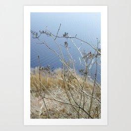 Winter Blossom Art Print