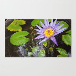 Enchanting Lotus Canvas Print