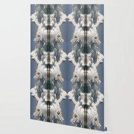 Snow Knose Wallpaper
