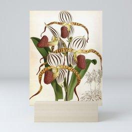 Vintage Plum Lindenia Orchids Mini Art Print