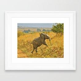 Elephant Calf Framed Art Print