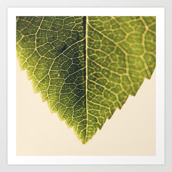 green leaf abstract Art Print