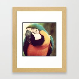 Watcha Lookin' At Framed Art Print