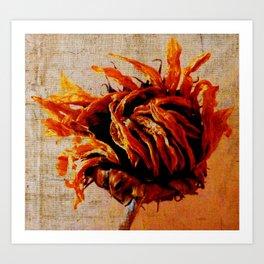 dry sunflower Art Print