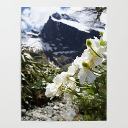White Flowers and Mountain Pass (Milford Sound) Poster