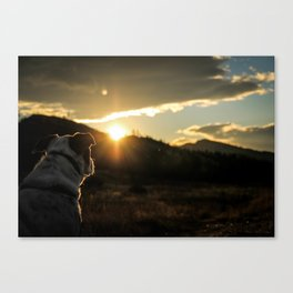 Canine Sunset Canvas Print