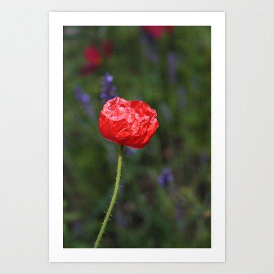 Crinkled Poppy Art Print