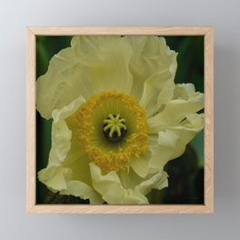 Yellow Cosmo Framed Mini Art Print