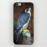 falcon iPhone & iPod Skins featuring Falcon by Veronika