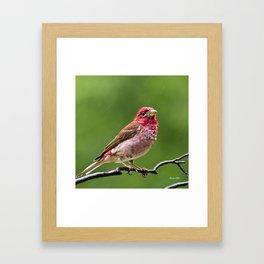 Finch in the Rain Framed Art Print