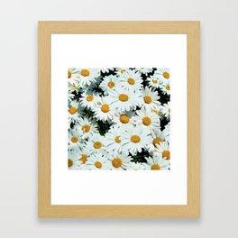 Daisies explode into flower Framed Art Print