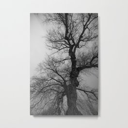 Nature Photography Weeping Willow | Lungs of the Earth Metal Print