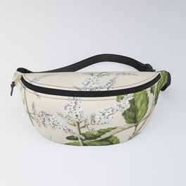Antique plant New Zealand lilac drawn by Sarah Featon (1848-1927) Fanny Pack