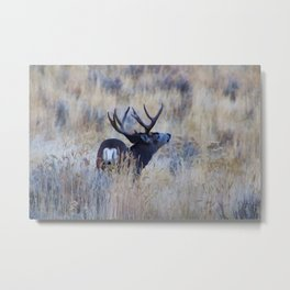 Black Tail Buck Metal Print