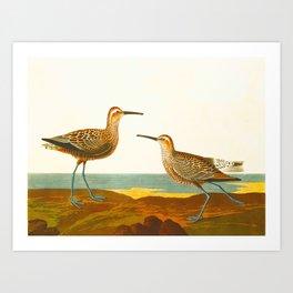 Long-legged Sandpiper Bird Art Print