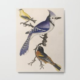 Blue jay, goldfinch, and Baltimore oriole - American ornithology - ALexander Wilson - 1829 Metal Print