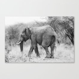 Elephant Tracks Canvas Print
