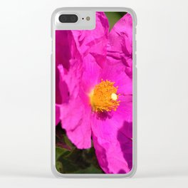 Papery Pinky Purple Rockrose by Reay of Light Photography Clear iPhone Case